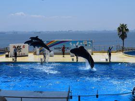 博多湾をバックにイルカがジャンプ!福岡「マリンワールド海の中道」は見どころだらけの水族館|福岡県|トラベルjp<たびねす>