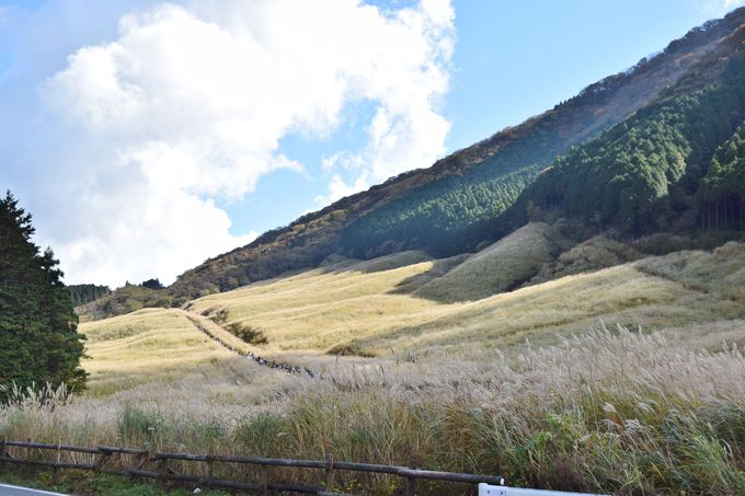 箱根の秋の風物詩・仙石原のすすき草原