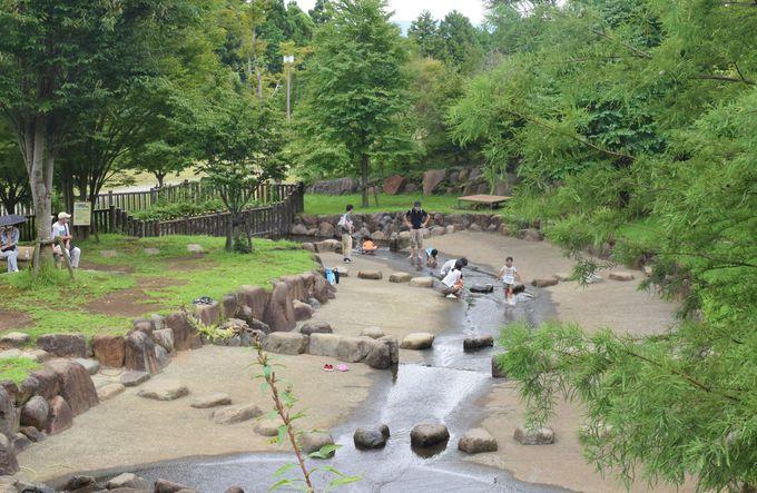 広くて自然いっぱいの園内。水遊びができる沢も!