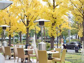銀杏並木の見えるカフェも。秋に行きたい横浜・山下公園通りと日本大通り|神奈川県|トラベルjp<たびねす>