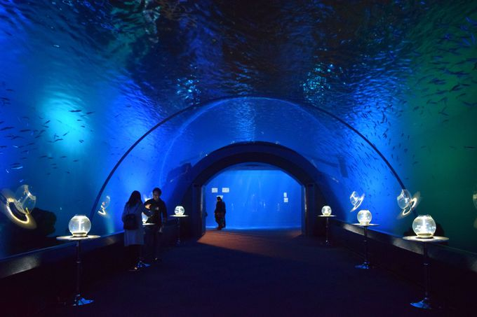 神奈川を代表する水族館へGO!「八景島シーパラダイス」「油壺マリンパーク」「新江ノ島水族館」
