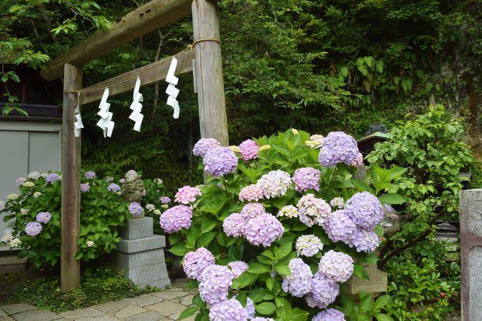 源氏山公園へのアクセス