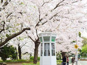桜に包まれるレトロ電話ボックス。横浜・山手エリアを春散歩|神奈川県|トラベルjp<たびねす>