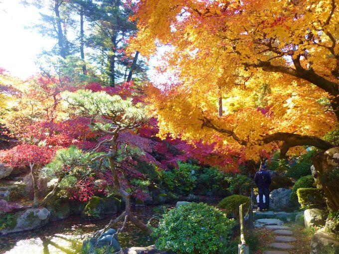 回遊式の日本庭園、徳明園を散策。夜にはライトアップも