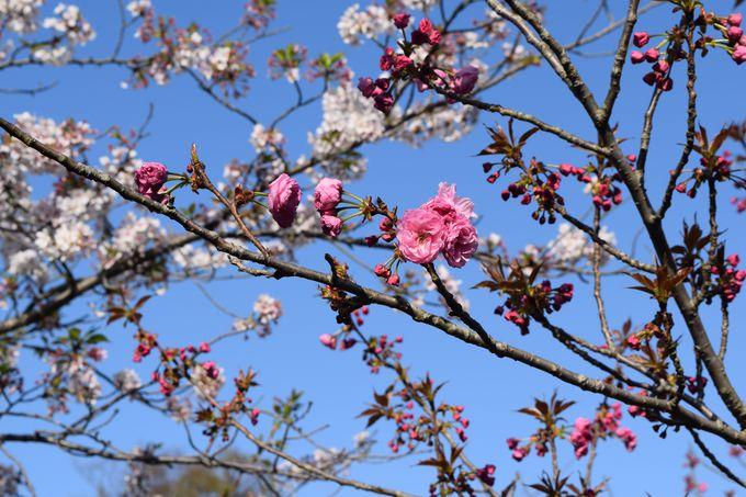 鶴岡八幡宮の四季の見どころ、年中行事は?