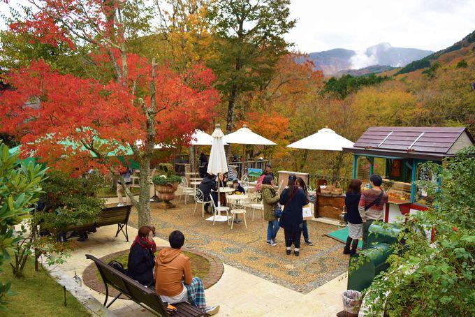 紅葉を見ながら散策、カフェで一休みも