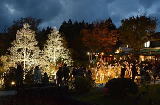夜の「ラ・コッピア」は、心ふるえる美しさ