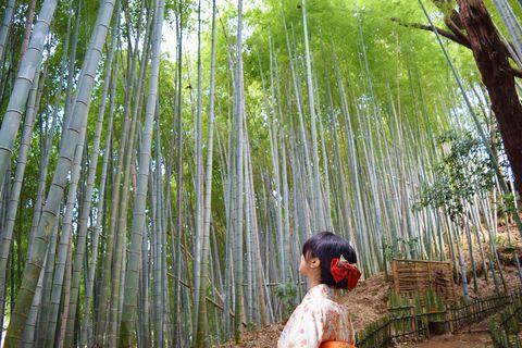 千葉・佐倉「ひよどり坂」で着物散歩体験
