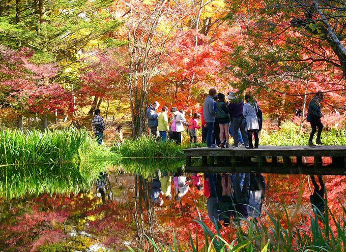 押さえておきたい、軽井沢の有名紅葉スポット「雲場池」