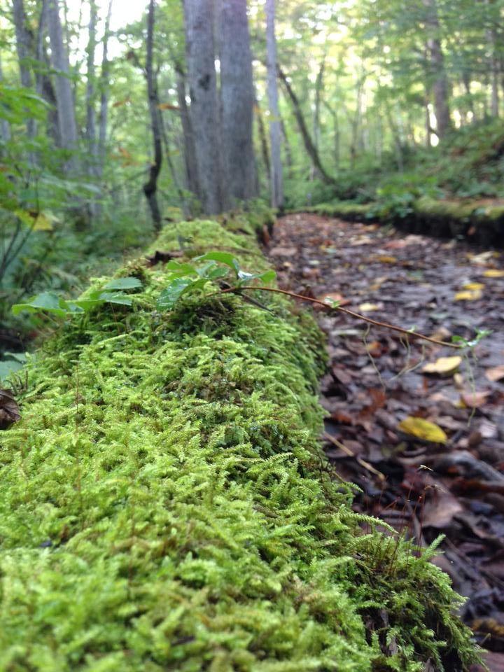 紅葉間近の奥入瀬渓流!苔が織りなす緑とのコントラストが楽しめます!!