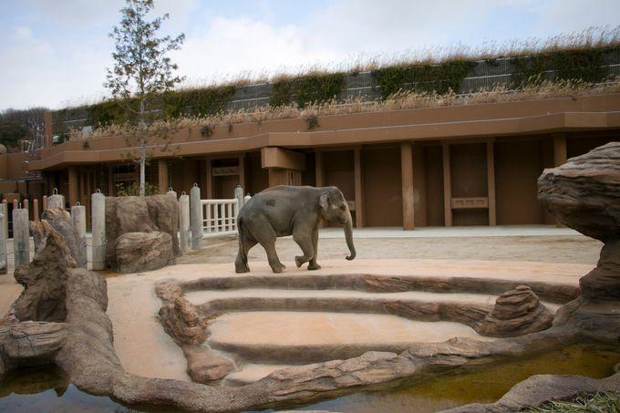 コアラブームの火付け役「東山動植物園」で一日遊ぼう