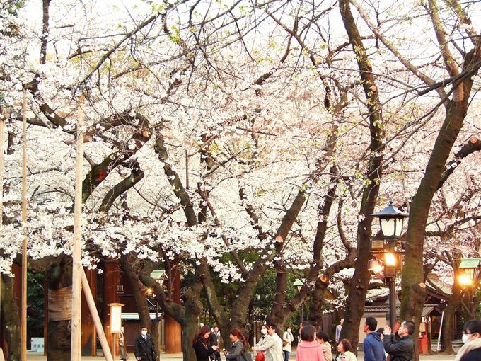 都内屈指の桜の名所!歴史を顧みる美しい神社「靖国神社」