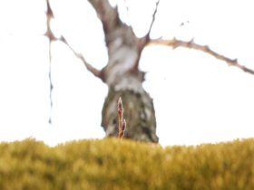 世界に一本だけのワイワイ桜!靖国神社でおススメの観賞方法