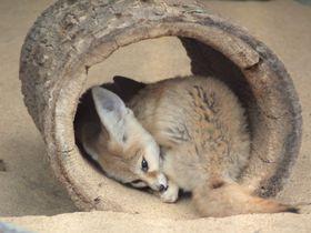 「井の頭自然文化園」東京観光の合間に動物たちとダラダラリラックス!|東京都|トラベルjp<たびねす>