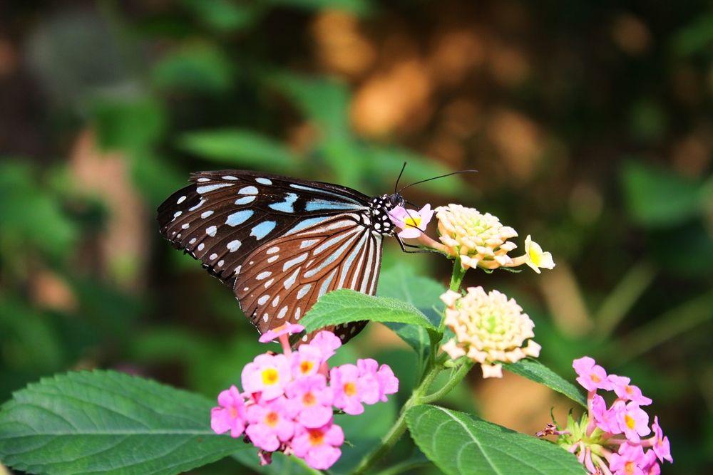 昆虫界のユートピア、華麗に1000匹超えの蝶々が舞う