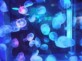 幻想的なクラゲは必見!特撮的イルカショーも見所「しながわ水族館」