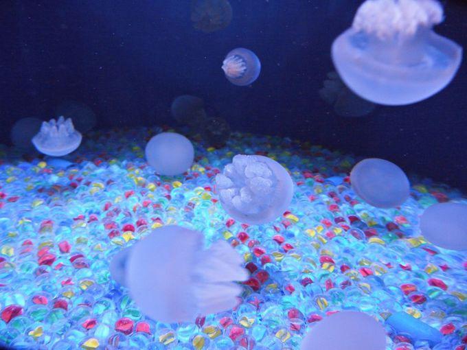 記念写真にオススメ、クラゲたちの夢遊世界