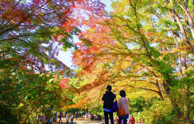これぞ日本の秋「高尾山」お手軽登山で美しい紅葉を