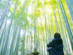 鎌倉フォト!天園ハイキングコースの美しいフォトジェニック|神奈川県|トラベルjp<たびねす>