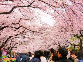 夜桜に水鏡桜「東京」ジャンル別花見スポット5選|東京都|トラベルjp<たびねす>
