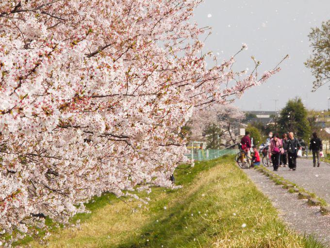 5.風桜「多摩川サイクリングロード」