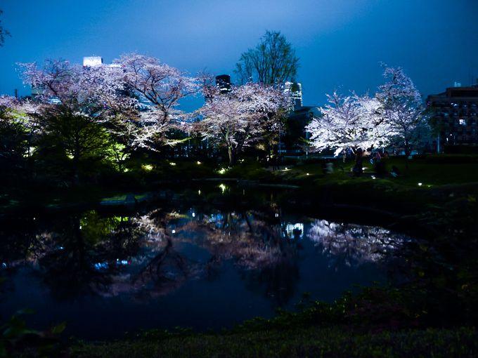 4.水鏡桜「毛利庭園」