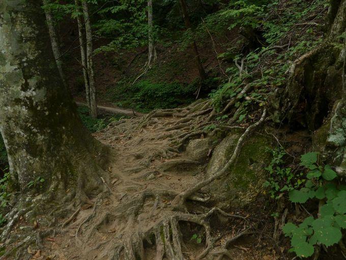 西沢渓谷の景観