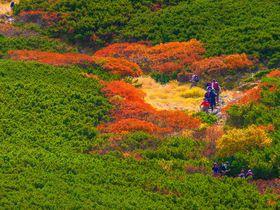 他の追随を許さない風景!南アルプスの女王「仙丈ヶ岳」で紅葉登山