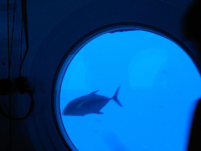 サブマリンは水深30メートルの世界へ!非日常の素晴らしい感動体験が