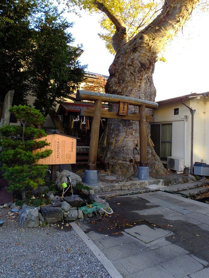大ケヤキの近くから湧き出す「槻井泉神社の湧水」