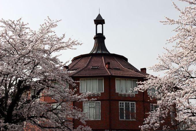 異国情緒満点なアートの拠点で桜を楽しむ