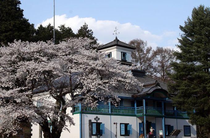 懐かしい校舎を囲む桜と、地場野菜の買いものを楽しむ