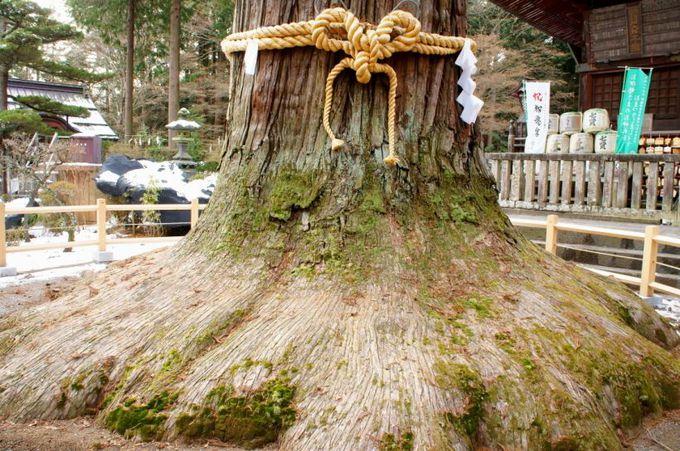数々のご神木の存在感と迫力!