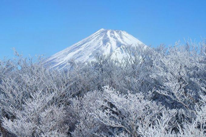 富士山と駿河湾を臨む大展望の山頂!