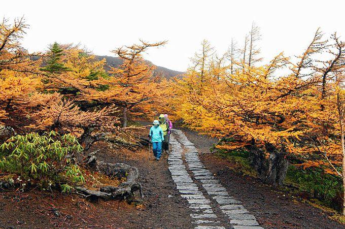まるで天然の庭園!富士山・御庭