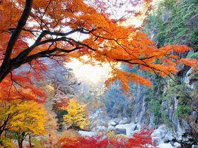 国の特別名勝!山梨・御嶽昇仙峡で四季の彩りと渓谷美を満喫!