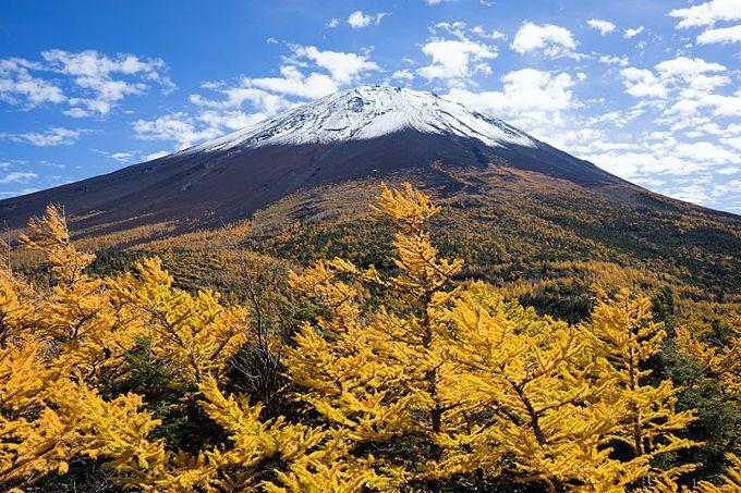 世界遺産の秋!黄金色に染まる富士山の御庭・奥庭(山梨)