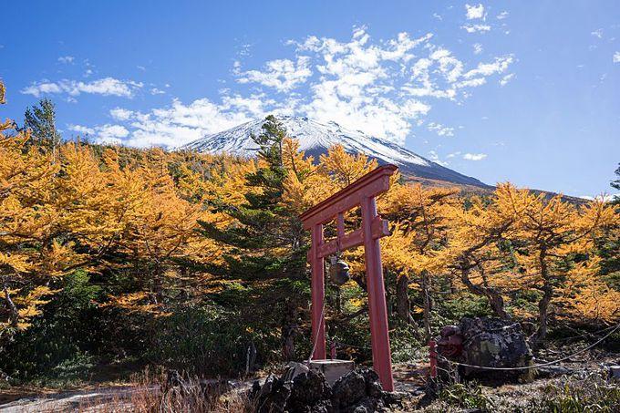 天狗が遊ぶほどの良い景色!?富士山・奥庭