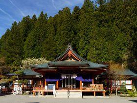 一生金運に恵まれる!?山梨・金櫻神社の御神木「ウコンの桜」のご利益にあやかろう!