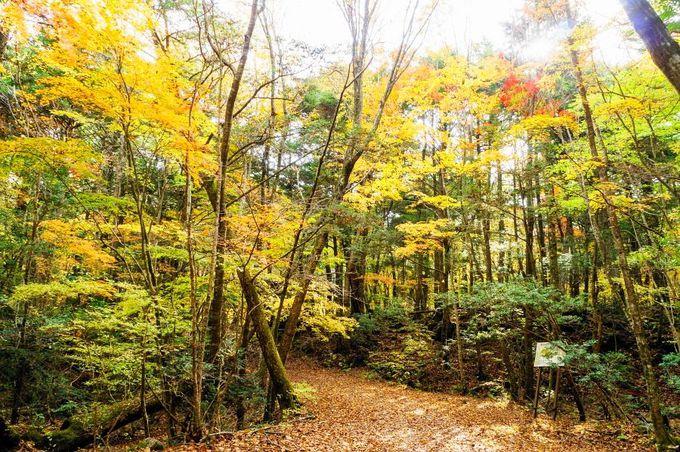 青木ヶ原樹海の魅力と紅葉シーズン