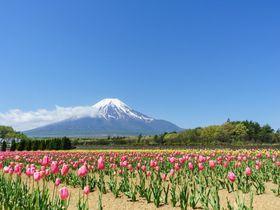 広大なお花畑と富士山が絶景!山中湖「花の都公園」の春夏秋冬