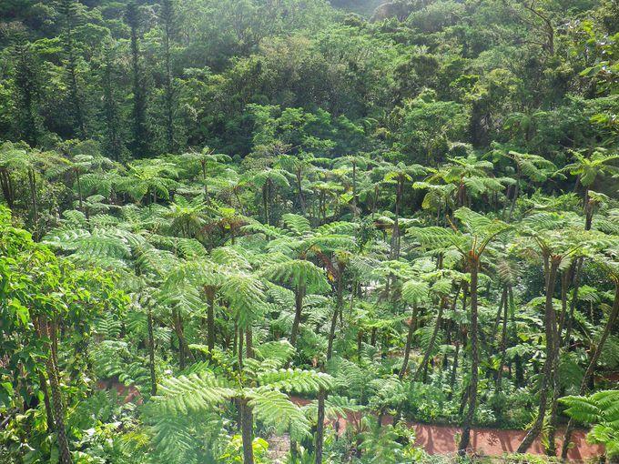 見渡す限りのジャングルで空気が濃い!