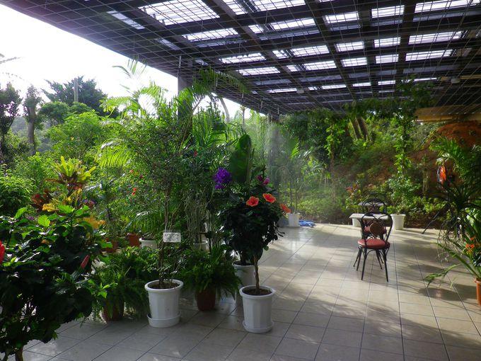 原生林ビューのカフェもあります