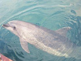 イルカと一緒に泳ごう!淡路島「じゃのひれドルフィンファーム」|兵庫県|トラベルjp<たびねす>