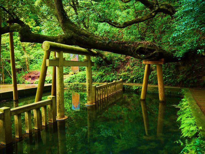 全国に約600社ある鹿島神社の総本社!茨城「鹿島神宮」