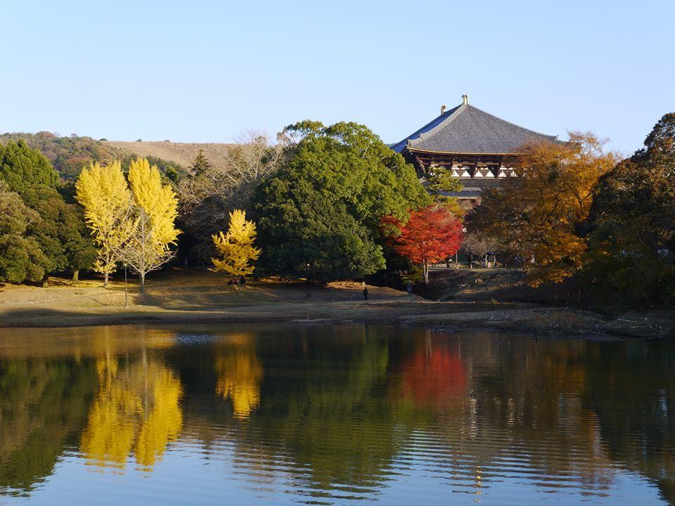 【第4位】池とのコントラストが絶妙!大仏池にうつる大仏殿