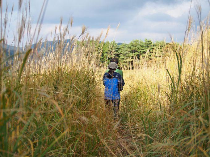 砥峰高原の楽しみ方(3) ハイキング