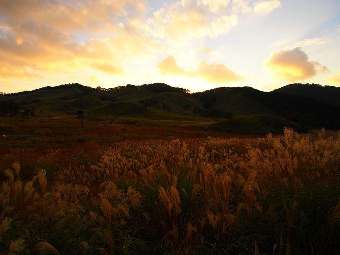秋だけの絶景!黄金色のススキとオレンジの夕暮れ
