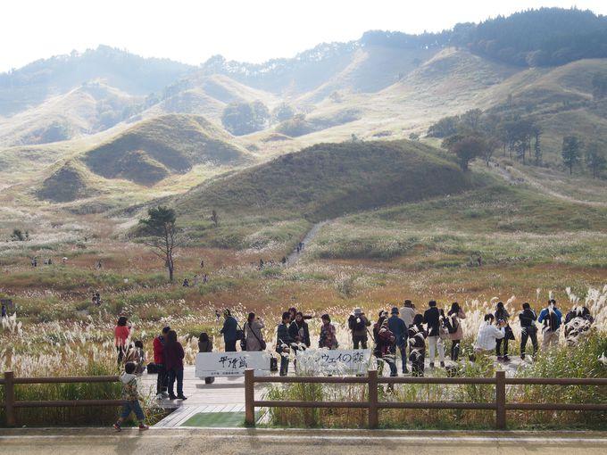 砥峰高原の楽しみ方(1) 散歩