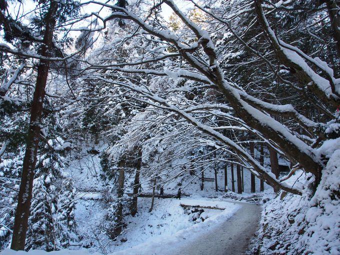 雪の林間道を歩いていく